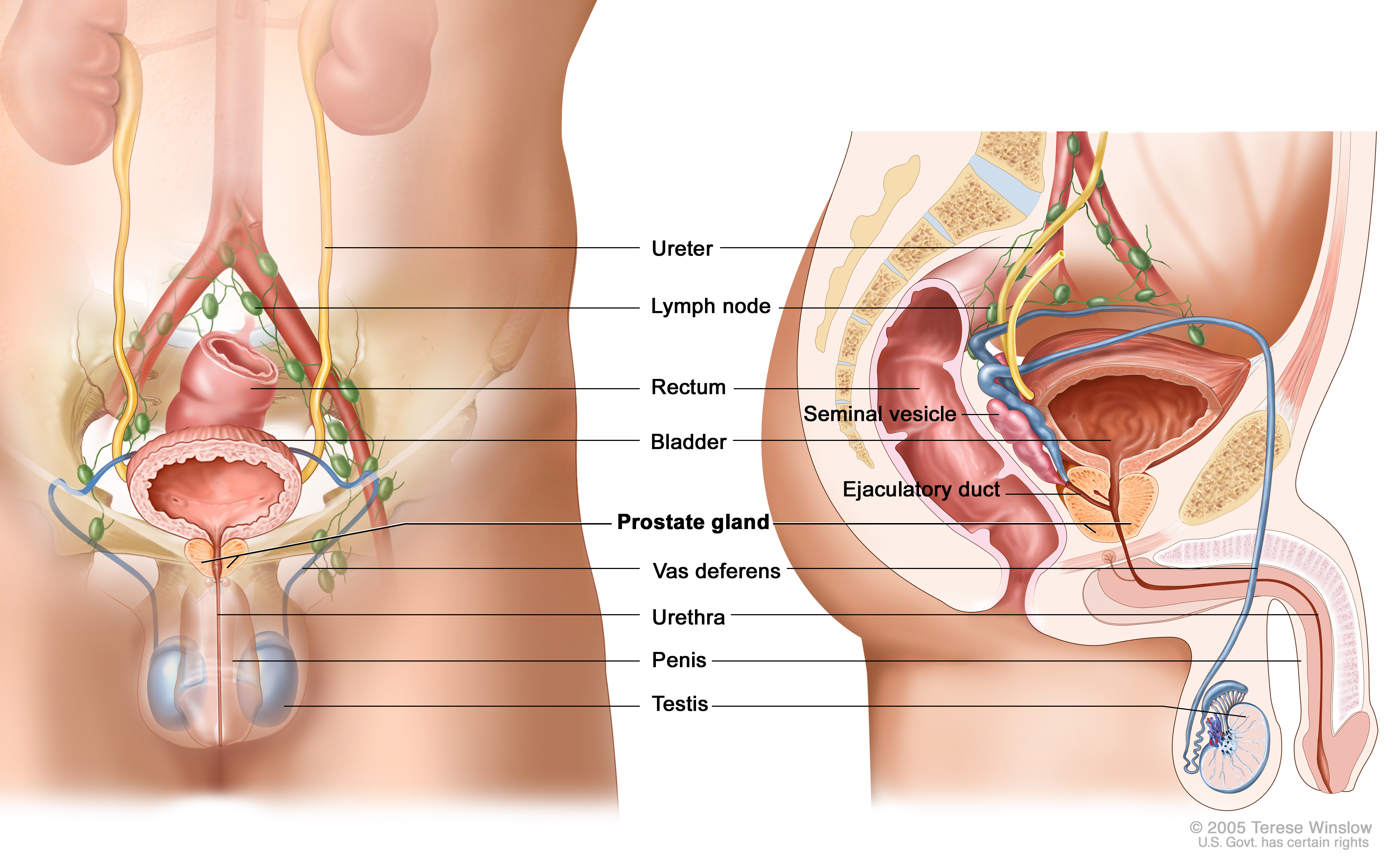 The urological treatment part 1 5